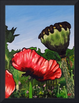 Poppies and Pod