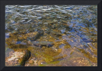 Fish Rainbow Trout Art Prints Dads gifts
