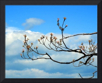 Blue Sky and Budding Red