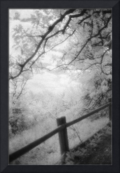 Infrared fence and meadow