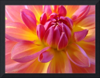 DAHLIA FLOWER ART Prints Gifts Botanical Floral