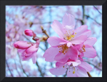 Pink Spring Flower Blossoms