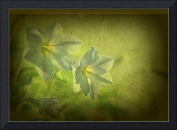 gentian with TEXTURE-T459-2