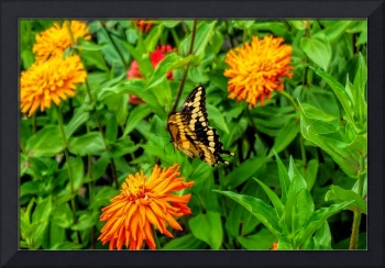 Flowers and Swallowtail Butterfly