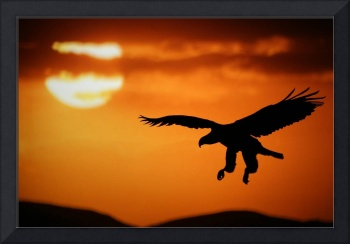 Sunset eagle