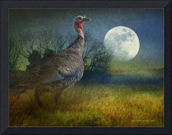 midnight forage turkey