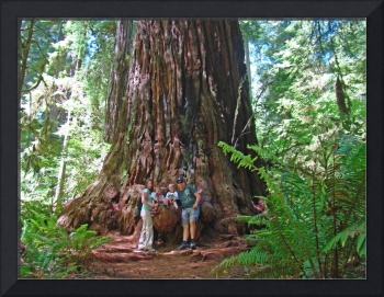 Imagekind Canvas gifts Redwood Trees Larsen Family