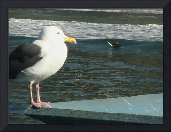 SeaGull and a Surfer