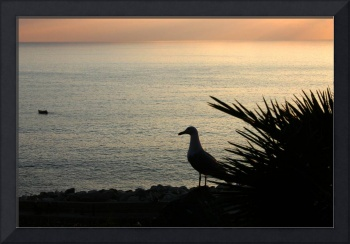 Bird in the sunset - no border