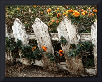 Elsinore Fence