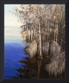 St. Johns River Cypress