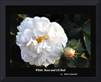 White Rose and Lil Bud