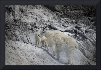 Mama Mountain Goat and Kid, Nose to Nose