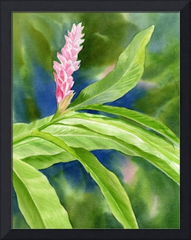 Pink Ginger with Blue and Green Background