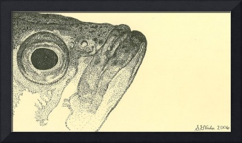 stippled fishhead