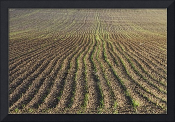 Agriculture Landscape Farming Abstract