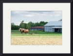 Amish Plow Horses by Rich Kaminsky