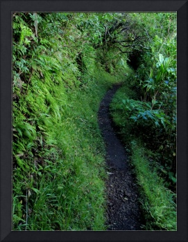 Tropical Hiking Trail
