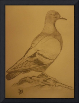 Feral pigeon ...my latest piece of artwork done in
