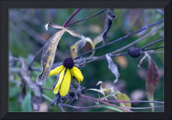Photography For Sale - Winter's Coming Flora