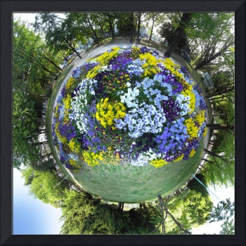 Pansy Planet