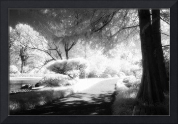 Infrared Path and Tree