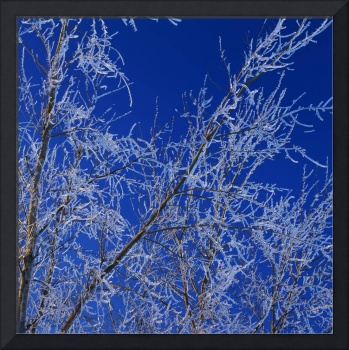 Low angle view of ice on bare tree branches