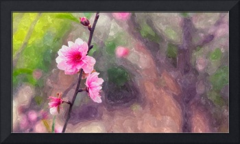 Blooming cherry blossom 2
