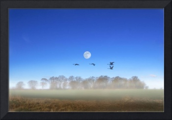 Geese Flying on a Misty Morning