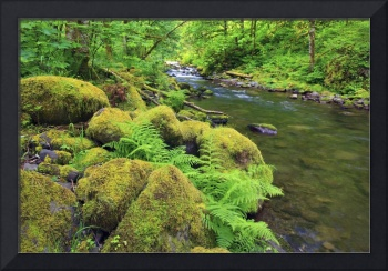 Tanner Creek In Columbia River Gorge National Scen