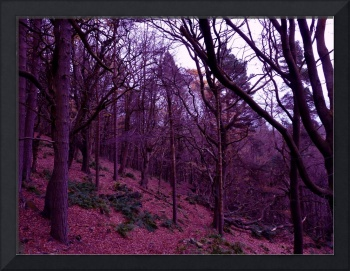 castle craggs forest