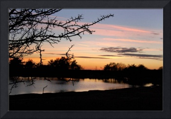 New Forest At Dusk