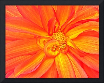 Orange & Yellow Blossom II