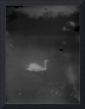swan soft black and white dreamy