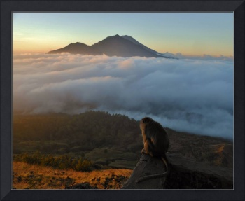 Macaque Monkey Watching Bali Mountain Sunrise