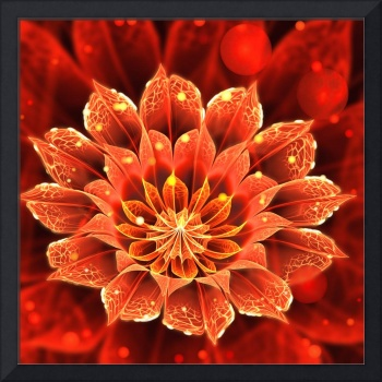Beautiful Red Dahlia Bloom of Fire