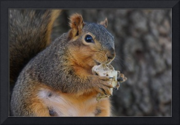 Squirrel chewing on a bone
