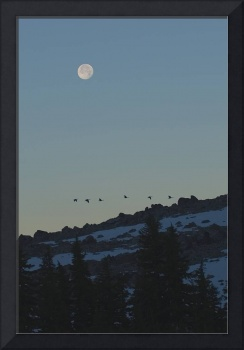 Moonset and Geese Over South Sister