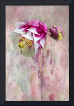 Columbine Blossom with Watercolor Texture