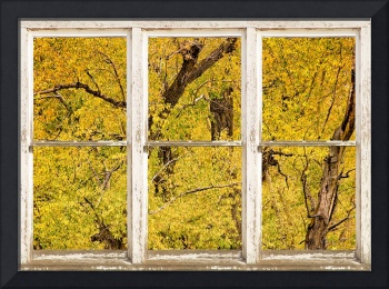 Cottonwood Fall Foliage Colors Rustic Farm Window