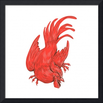 Chicken Rooster Crouching Drawing