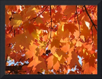Fall art prints Orange Autumn Tree Leaves Baslee