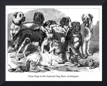 Prize Dogs in the National Dog Show at Islington