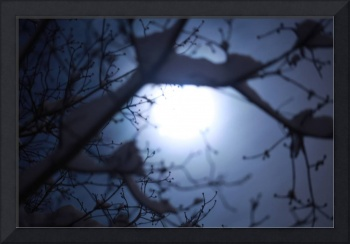 Full Moon - Scary Horror Picture