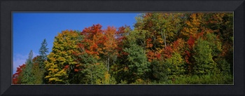 Autumn Trees E of Barre VT