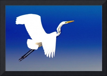 Great Egret III