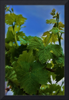 Vine Leaves in the Sky