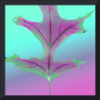 Shocking Pink and Green Oak Leaf