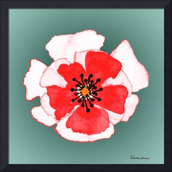 Expressive Red Pink and Green Poppy Floral Macro