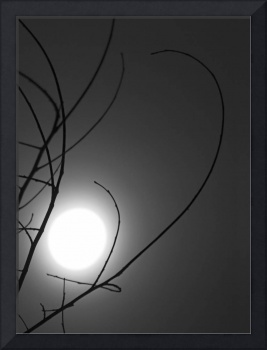 Full Moon Seen Through Curved Branches-